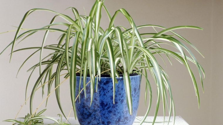 6 plants that clean negative energy from your home